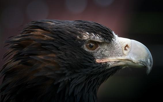 Обои Макрофотография головы орла, хищник, глаз, клюв