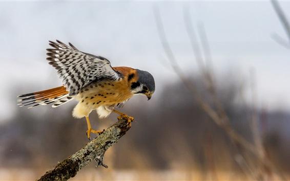 Wallpaper Eagle, wings, bokeh