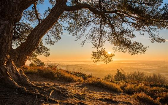 Wallpaper England, Surrey, Greensand Ridge, trees, sun rays