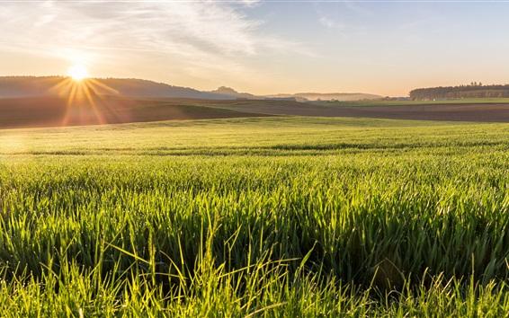 Обои Поля, трава, восход солнца