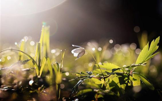 Wallpaper Flower, leaves, water drops, backlight