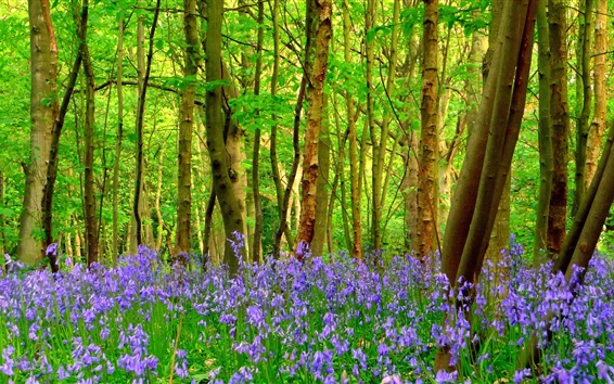 Wallpaper Forest, trees, blue flowers, spring