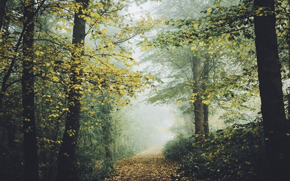 Wallpaper Forest, trees, foliage, fog, trail