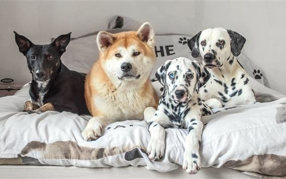 Fondos de pantalla Cuatro perros en la cama