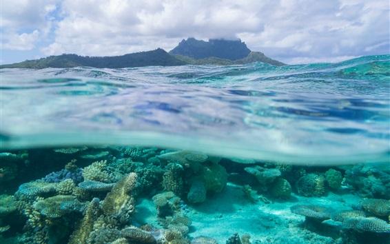 Wallpaper French Polynesia, Leeward Islands, Bora Bora, corals, sea, underwater