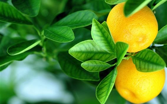 Wallpaper Fresh oranges, green leaves