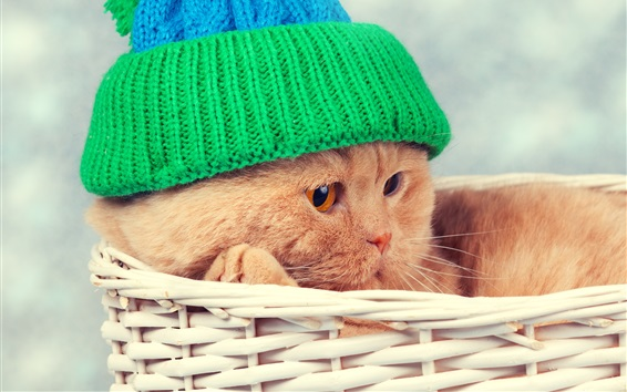 Wallpaper Funny animal, cat, basket, hat