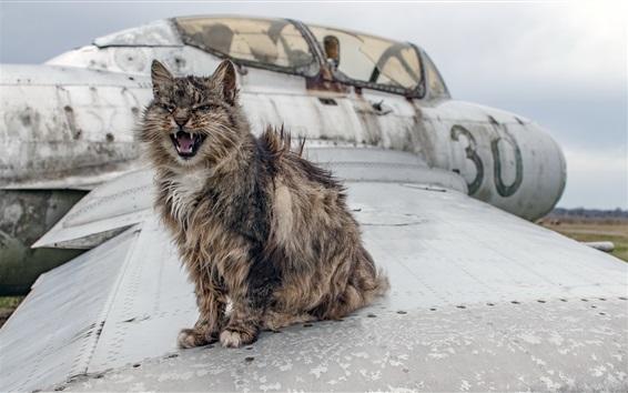 Wallpaper Furry cat, plane wing