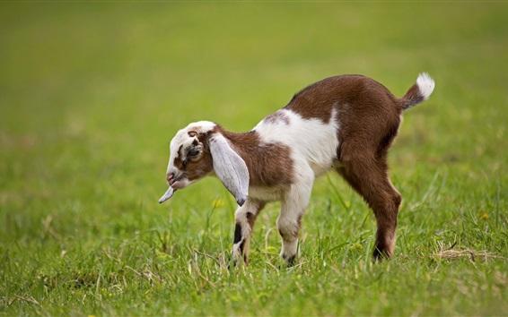 Papéis de Parede Filé de cabra, capim