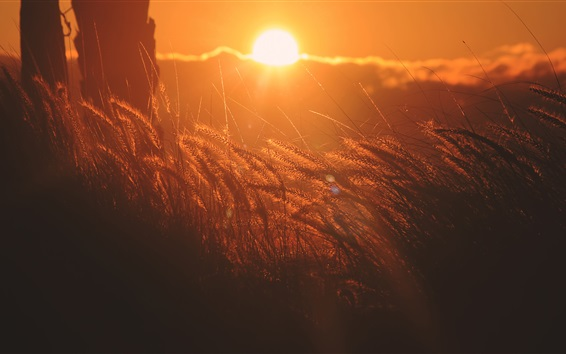 Wallpaper Grain at sunset, red sky