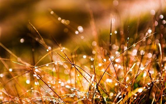 Wallpaper Grass after rain, water drops