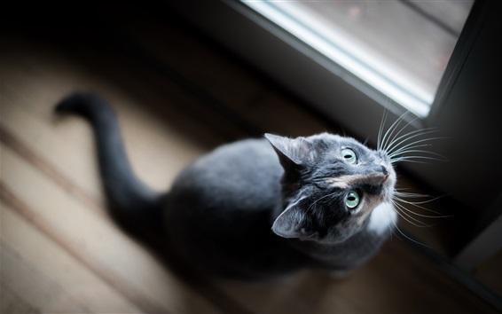 壁紙 緑の目は猫を見上げる