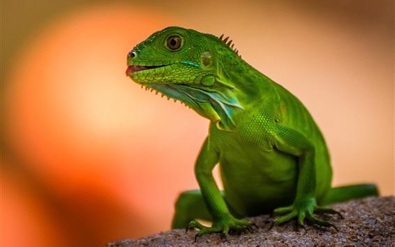 Обои Зеленая ящерица, размытый фон
