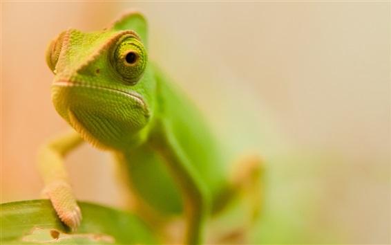 Wallpaper Green lizard face close-up, bokeh