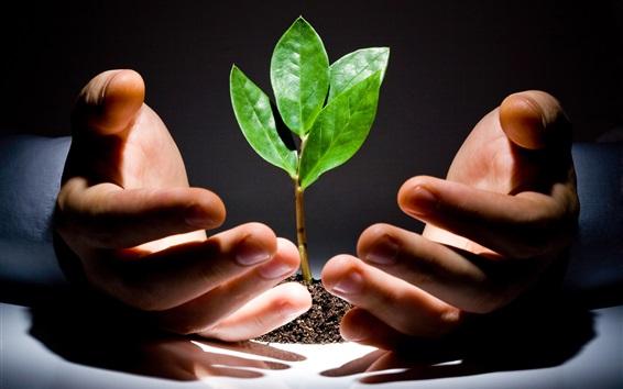 Fondos de pantalla Las manos cuidan las plantas verdes