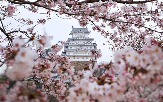 Wallpaper Himeji castle, sakura, Japan