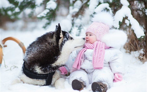Wallpaper Husky dog and cute baby, thick snow