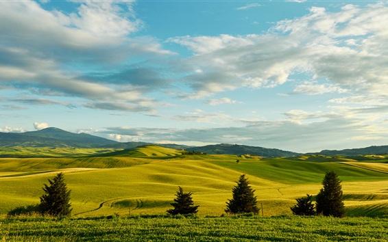 Wallpaper Italy, Tuscany, trees, greens, fields, hills