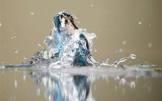 Fondos de pantalla Kingfisher fuera del agua