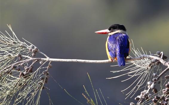 Papéis de Parede Kingfisher, galhos, bokeh