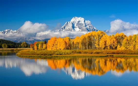 Обои Озеро, деревья, горы, осень, США, Национальный парк Гранд Тетон