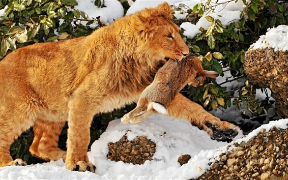 Fond d'écran Lion attrape un lapin