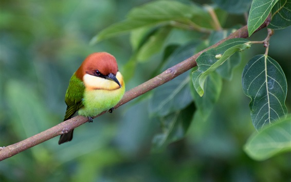 Fondos de pantalla Pájaro encantador, follaje, ramitas