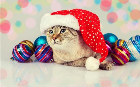 Обои Прекрасный кот, рождественские шары, шляпа
