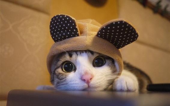 Обои Прекрасный котенок смотрит на тебя, шляпа, юмор