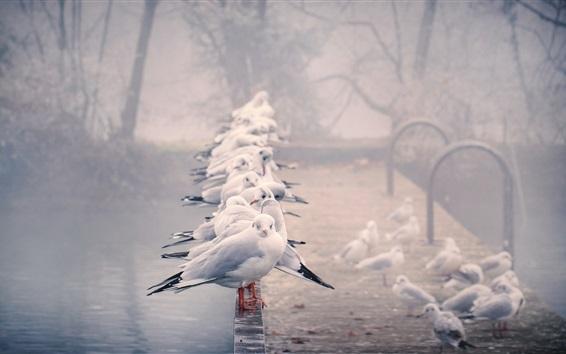 Обои Многие чайки, перила, пруд