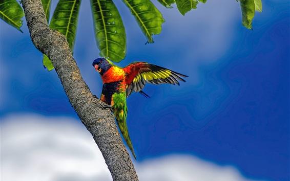 Обои Многоцветный попугай, дерево, голубое небо