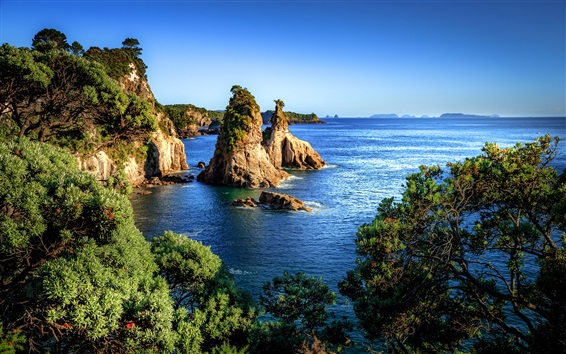 Wallpaper New Zealand, sea, trees, rocks