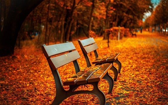 Wallpaper Park, bench, red leaves on ground, path, autumn