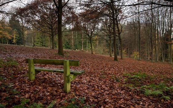 Fond d'écran Parc, arbres, banc, automne
