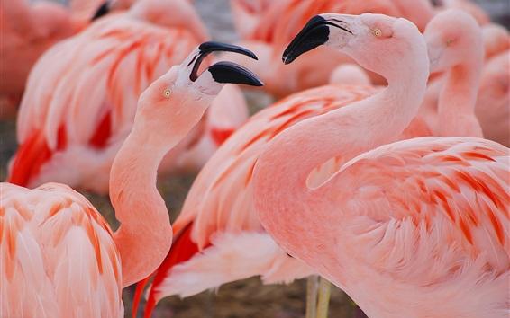Обои Розовое перо фламинго
