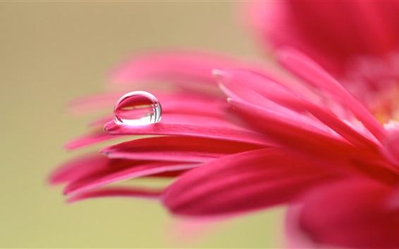 Обои Розовые цветочные лепестки макросъемки, роса