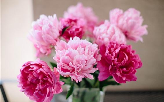 Wallpaper Pink flowers, peonies close-up