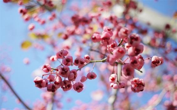 Wallpaper Pink flowers, twigs, bokeh, spring