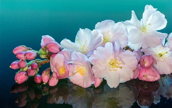 Обои Розовые белые вишневые цветы крупным планом