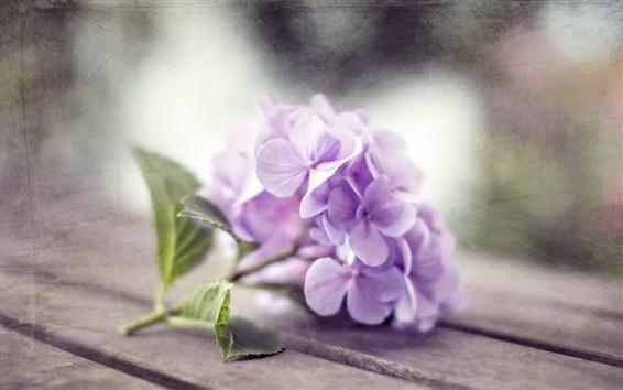 Fond d'écran Fleurs d'hortensia pourpre, planche en bois
