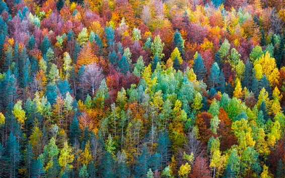 Wallpaper Rainbow color forest