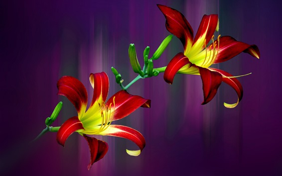 Wallpaper Red yellow petals lily, purple background