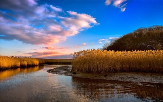 Wallpaper Reeds, river, clouds, sunset