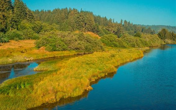 Fond d'écran Rivière, herbe, forêt, arbres, automne