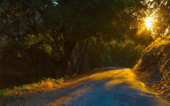 Wallpaper Road, trees, sun rays, morning