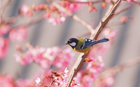 Обои Сакура, птица, весна