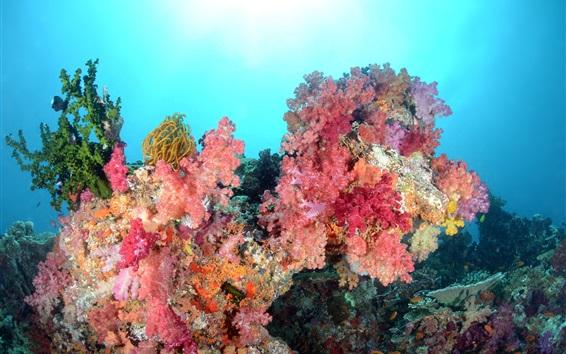 Wallpaper Sea, underwater world, beautiful corals