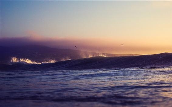 Fond d'écran Mer, vagues, coucher de soleil, oiseaux