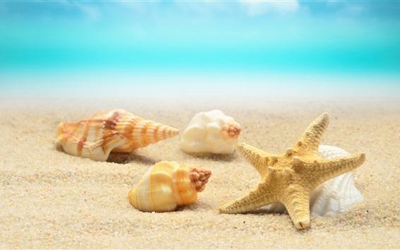 Обои Морские ракушки, морские звезды, пляж, море