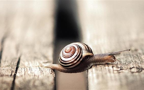Wallpaper Snail macro photography, wood board